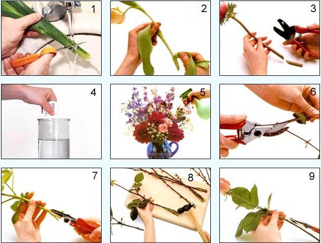 Инструкция по уходу за букетом и живыми цветами