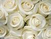 Кому дарить белые розы
