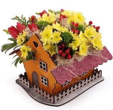 Какие цветы подарить на новоселье