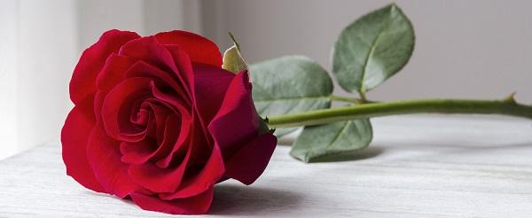 Какие цветы подарить своей девушке