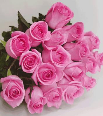 21 роза Ревиваль 50 см.