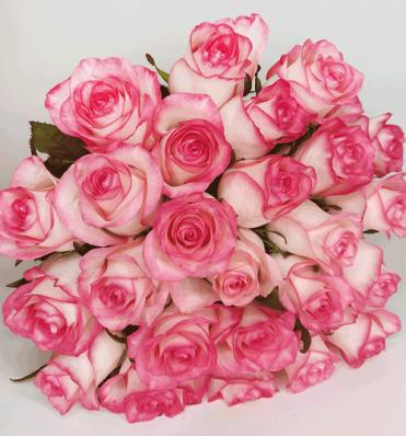 21 роза Джулия в букете