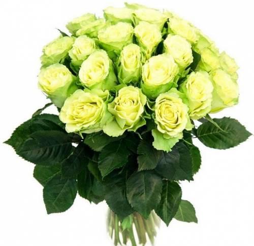25 зелёных роз