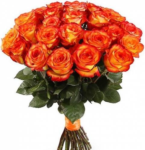 25 огненных роз