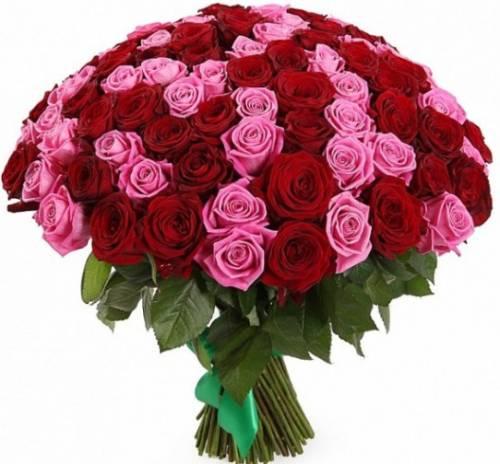 101 розовая и красная роза