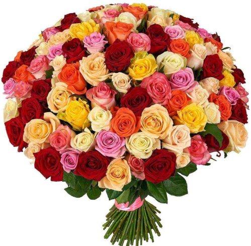 101 роза в разноцветном миксе