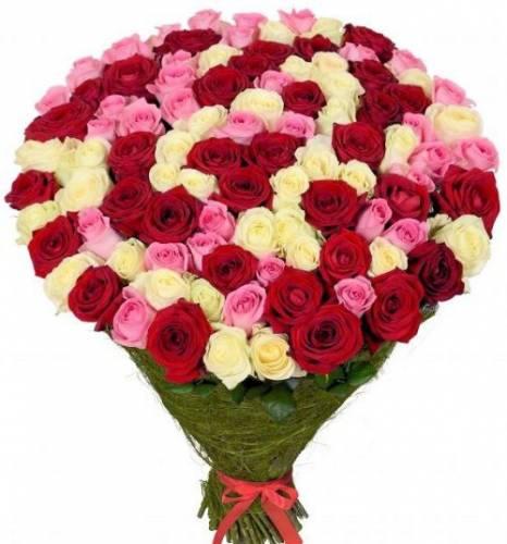 101 красная, розовая и белая роза в сетке