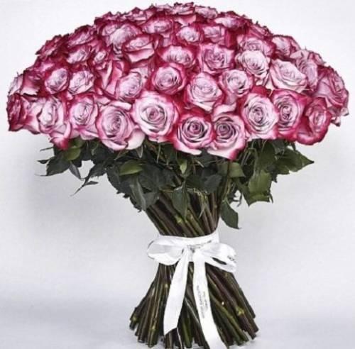 101 роза Deep Purple