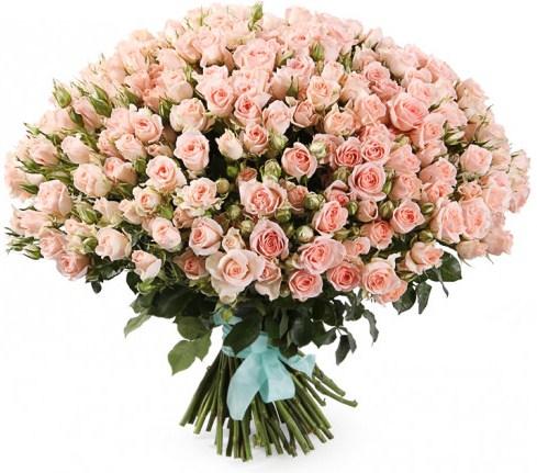 101 нежно-розовая кустовая роза