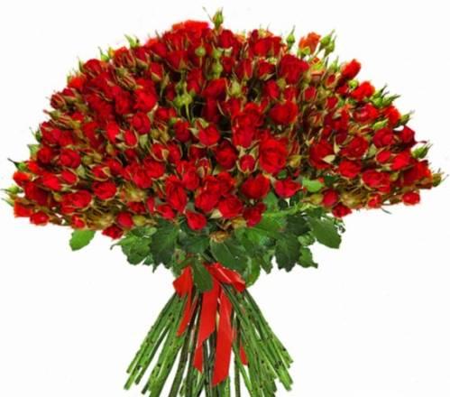 101 красная кустовая роза