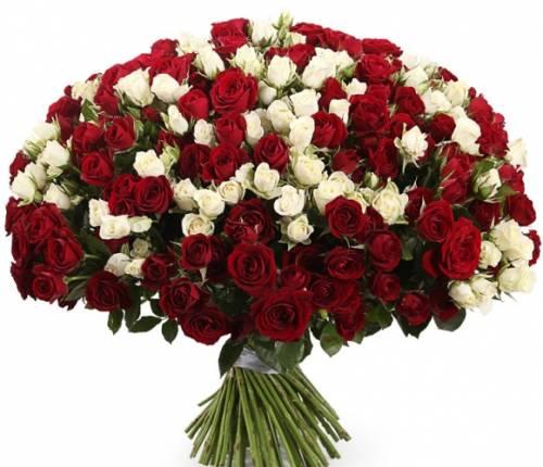 101 красная и белая кустовая роза