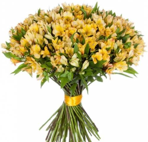 Модный букет из 37 жёлтых Альстромерий