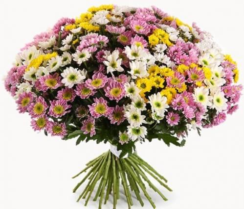 51 хризантема на День матери