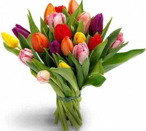 Букет для школьника из тюльпанов
