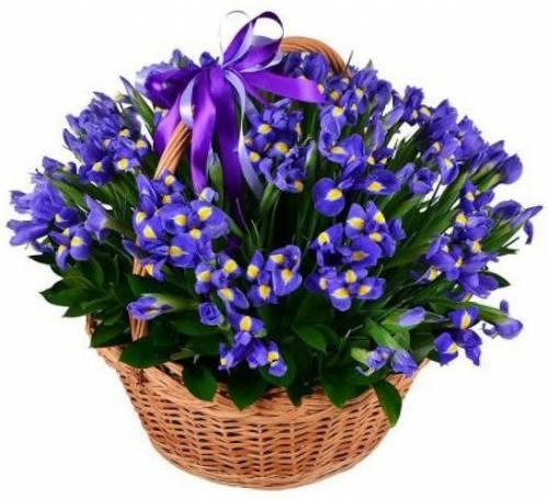 Большая корзина цветов с ирисами