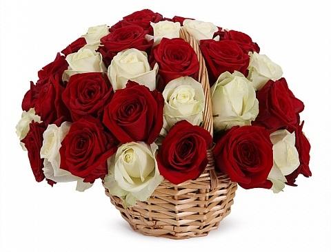 43 красных и белых роз в цветочной корзине