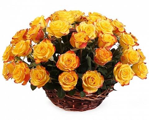 51 красно-жёлтая роза в корзине