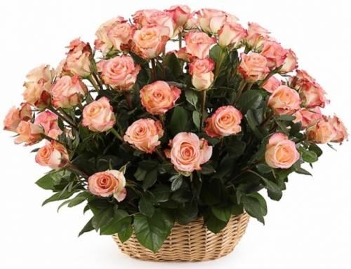 51 персиковая роза в корзине