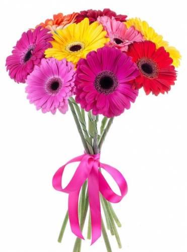 9 разноцветных гербер на День учителя