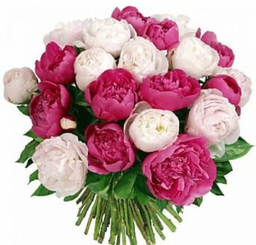 25 белых и розовых пионов на День рождения