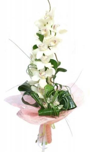 Белая орхидея для руководителя