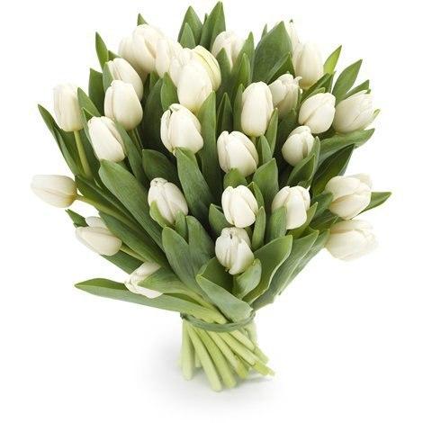 31 белый тюльпан на 8 марта